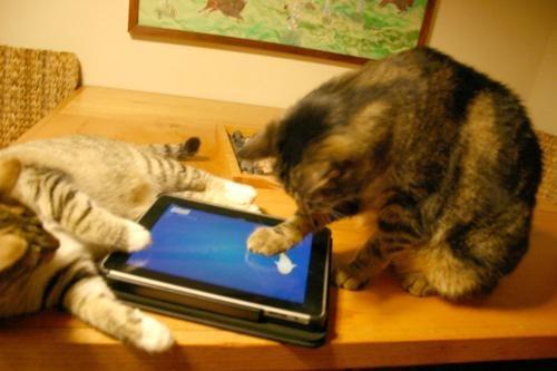 Videogiochi per gatti su tablet da Friskies